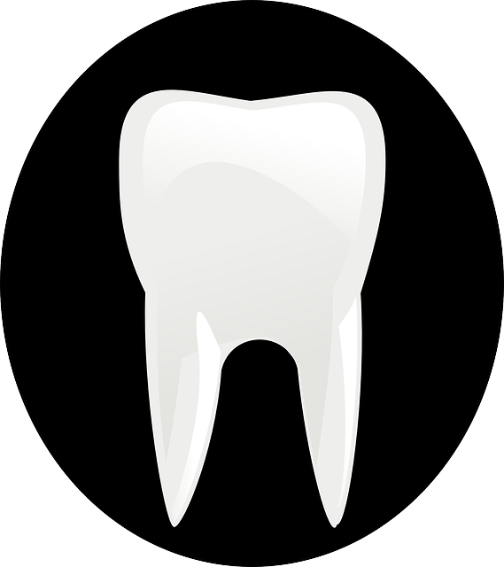 tooth 146674 640